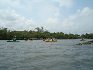 A Kayak Lake Worth tour guide leads a group through the Snook Islands.