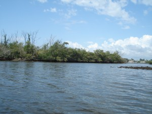 Kayaking in the Bingham Islands, FL