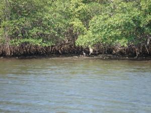 Birdwatching by Kayak in the Bingham Islands